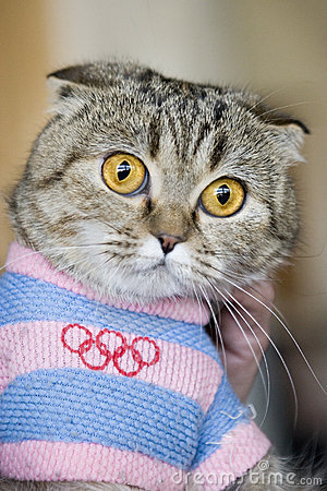 Cat in Olympic dress