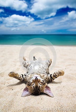 Free Cat On Beach Stock Images - 38047744