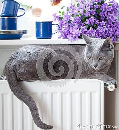Free Cat On Radiator Stock Photography - 19543852