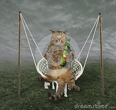 Free Cat On The Swing Stock Image - 120420741
