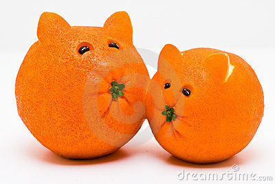 Cat Oranges