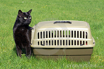 Cat out of the carrier box