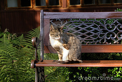 Cat over bench