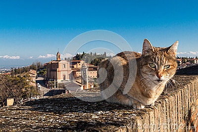 A cat on the parapet walls of the fortress of longiano