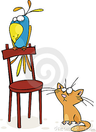 Cat and parrot