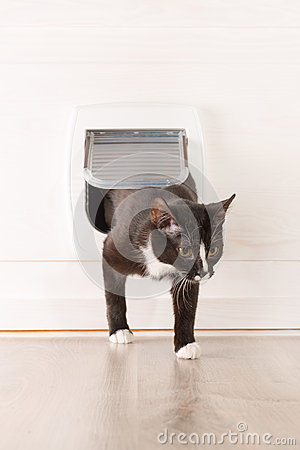 Free Cat Passing Through The Cat Door Stock Images - 50045414