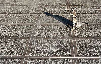Cat on a pavement