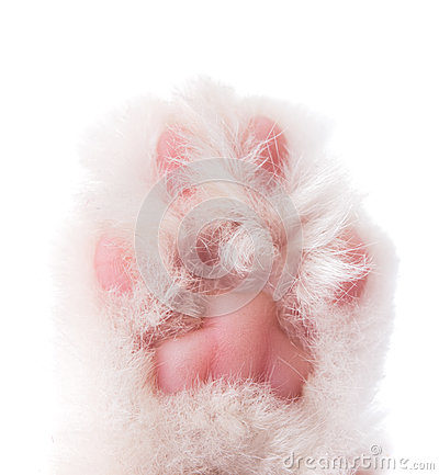 Cat paw isolated