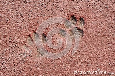 Cat Paw Prints in Concrete