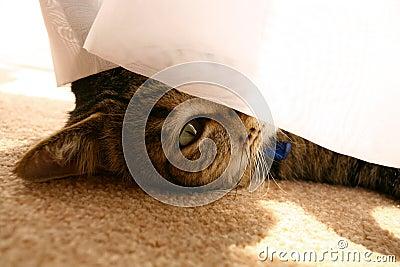 Cat Peeking