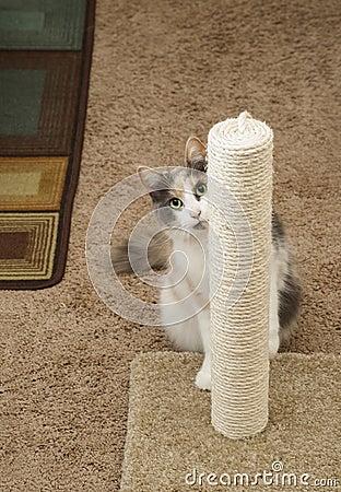 Cat Peeking around scratching post