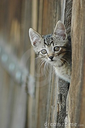 Cat peeking barn door