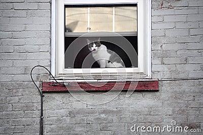 Cat Peering from City Window
