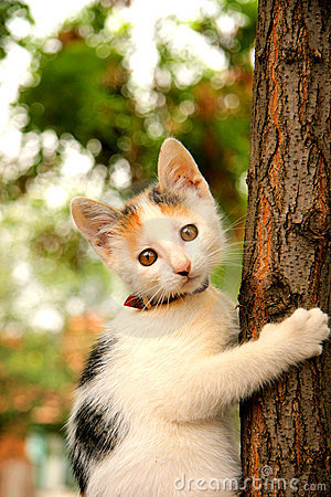A cat perching in a tree