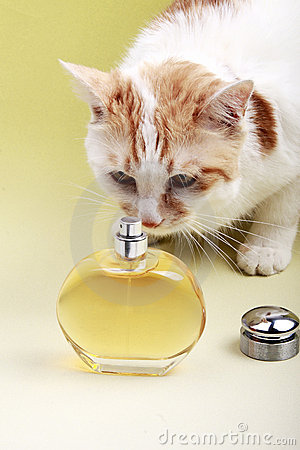 Cat and perfume