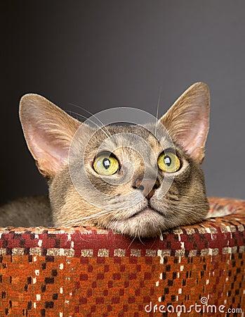 Cat in a pet bed