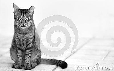 Cat photo - Contented