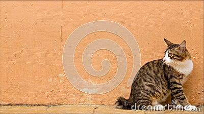 Cat photo - Ever vigilant