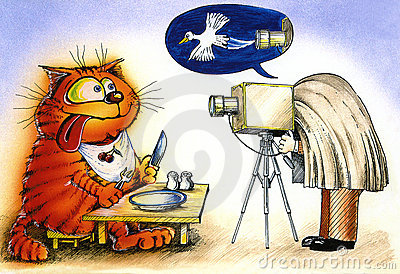 Cat and a photographer