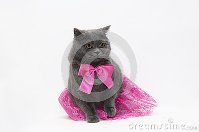 Cat in a pink dress