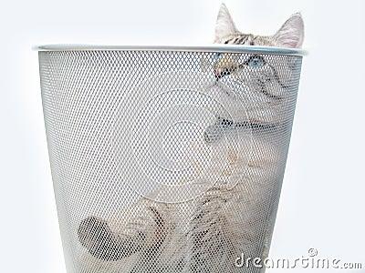Cat Play 1