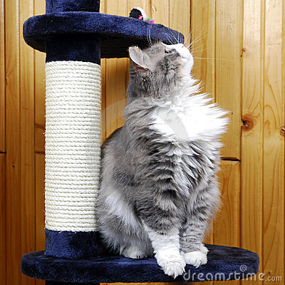 Cat playing in a cat-house