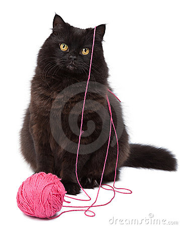 Cat playing with clew isolated
