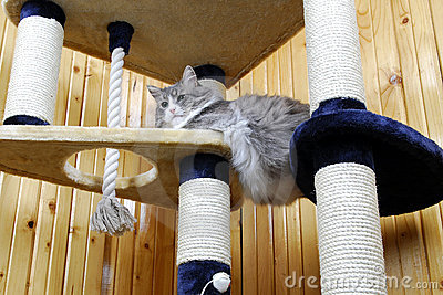 Cat playing in a huge cat-house