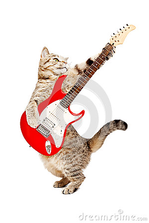 Free Cat Playing On Electric Guitar Royalty Free Stock Image - 88196516