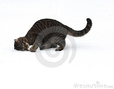 Cat playing with snowball