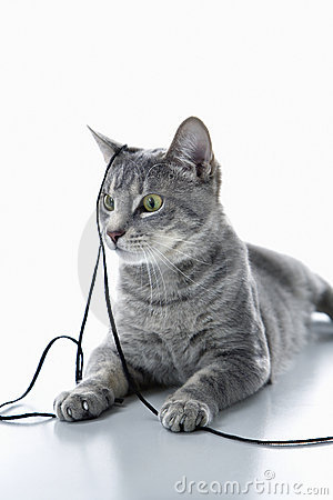 Cat playing with string.