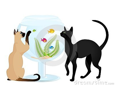 Cat plays with a small fish