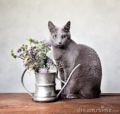 Free Cat Portrait Royalty Free Stock Images - 21581469