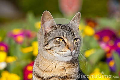 Cat portrait in garden