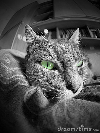 cat portrait with green eyes