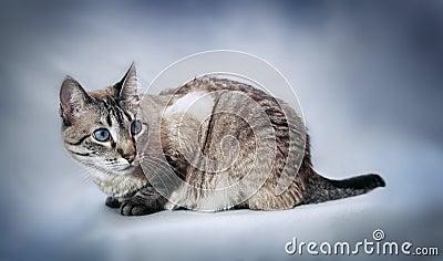 Cat posing