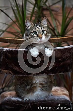 Cat posing for camera.