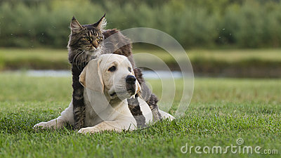 Cat and puppy Editorial Photography