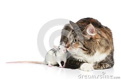 Cat and rats resting