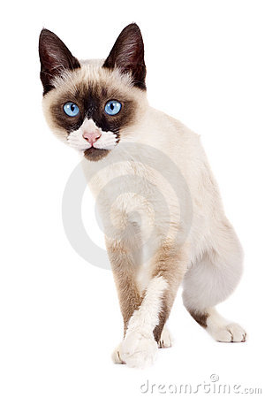 Free Cat Ready To Attack Stock Photo - 14622160