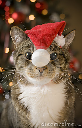 Cat with red hat