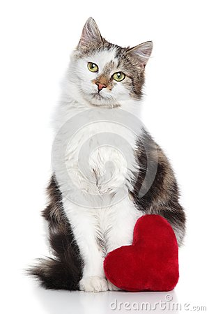 Cat with red valentine heart