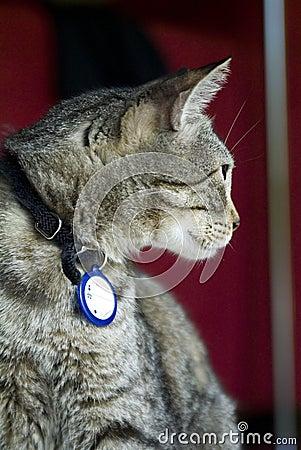 Cat with Regal Pose