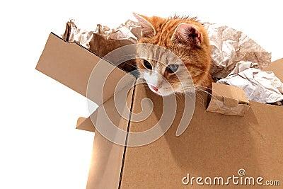 Cat in removal box