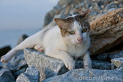 A cat resting on rocks by the sea