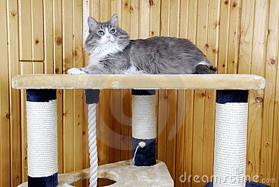 Cat resting on the top of a huge cat-house
