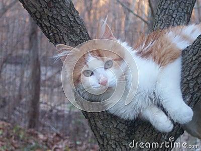 Cat Resting In Tree