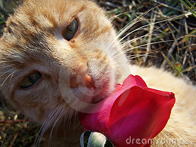 Cat and a rose.