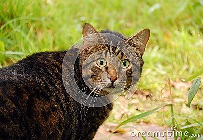 The Cat s Amazed Look