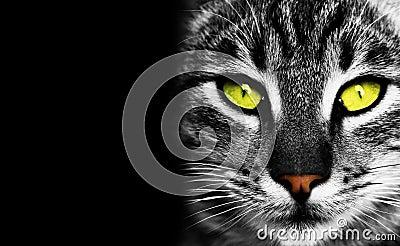Cat s eye